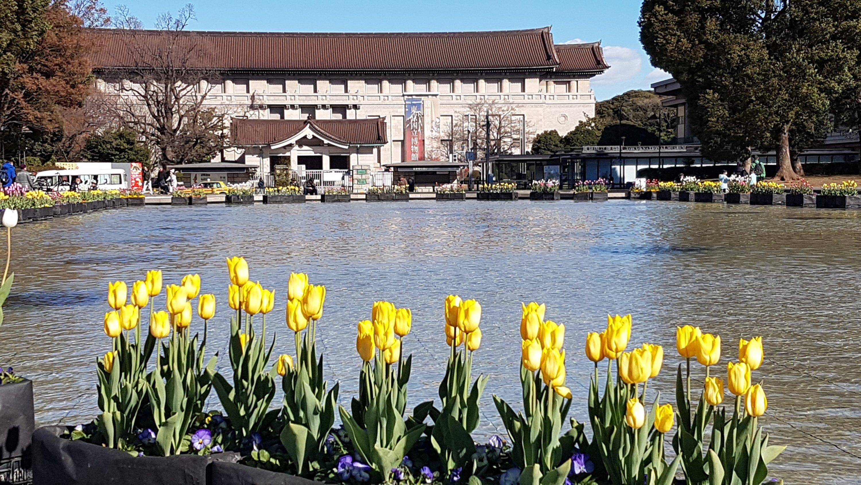 l'istituto nazionale sulle proprietà culturali di Tokio